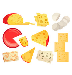 Various types cheese modern flat style vector