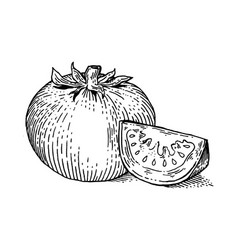 tomato vegetable engraving style vector image vector image