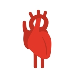 Human red heart symbol vector image