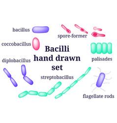 Arrangements of bacillibacterial microorganism vector