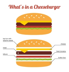 Flat design cheeseburger infographic vector