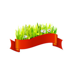 Grass and chamomiles in red ribbon vector