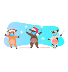 oxes in santa hats holding sparklers cows in masks vector image