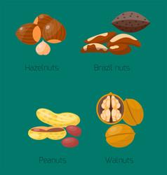 piles of different nuts hazelnut peanut walnut vector image