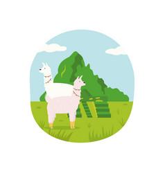 poster peru with cute llamas and machu picchu vector image