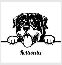 rottweiler - peeking dogs - breed face head vector image