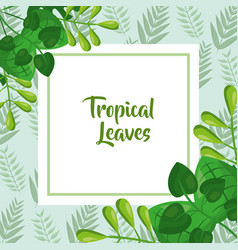 tropical leaves template fashion green design vector image