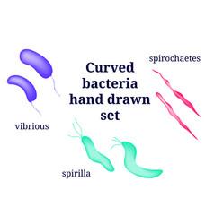 Arrangements of curved bacterial microorganism vector