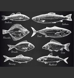 hand drawn fish sketch various fish salmon and vector image