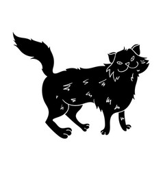 Norwegian forest cat icon in black style isolated vector