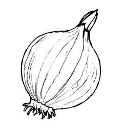Onion vector
