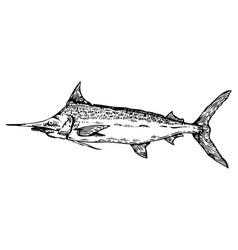 swordfish engraving style vector image vector image