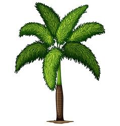 A Wodyetia Bifurcata plant vector