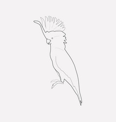 cockatoo icon line element of vector image