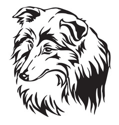 Decorative portrait of dog sheltie vector