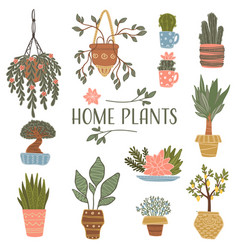 home plants planted in pot blooming flora vector image