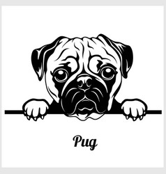 pug - peeking dogs - breed face head isolated on vector image
