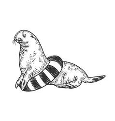 seal with life buoy sketch vector image