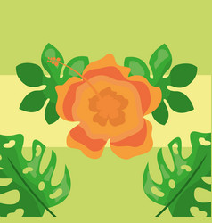 tropical leaves exotic flower natural botanical vector image