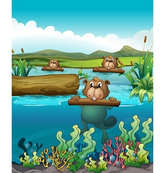 Three beavers in the river vector image vector image