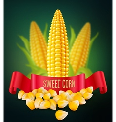 background with grains and cobs of corn and red ri vector image vector image