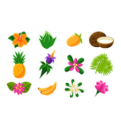 collection bright tropical summer exotic fruits vector image