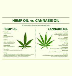 Hemp oil vs cannabis oil horizontal infographic vector