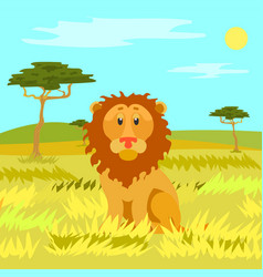lion sitting calmly on dry grass wild nature vector image