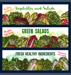 sketch banners of salads vegetables vector image