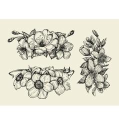 Flower hand drawn sketch tutsan hypericum vector