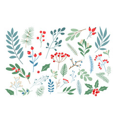 winter berries and leaves vector image