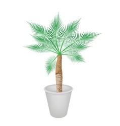 A Lovely Palm Tree in Flower Pot vector image vector image