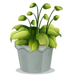 A green plant in a gray pot vector image