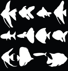 Aquarium fish vector