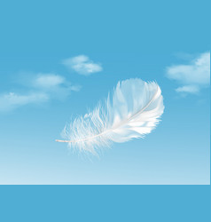 floating white feather on vector image