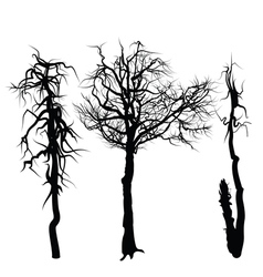 trees isolated on white background vector image