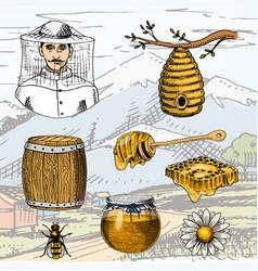 Apiary farm hand drawn vintage honey making vector