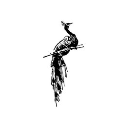 Hand drawn sketch of peacock bird black on white vector