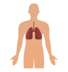 human silhouette with inflamed respiratory system vector image