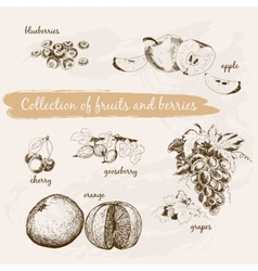 Collection of fruits and berries vector image
