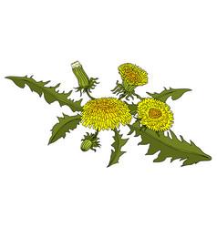 dandelions colorful vector image