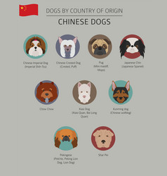 Dogs by country of origin chinese dog breeds vector