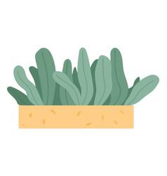 plant growing in pot or planter green indoor vector image