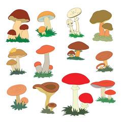 set different edible mushrooms cartoon vector image