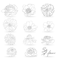 Set of flowers monochrome vector image