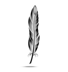 Black and white contour feather vector
