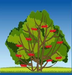 Bush ripe rowanberry on year glade vector