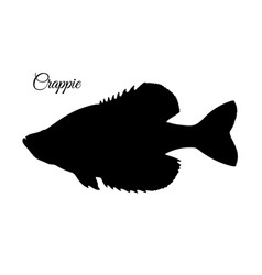crappie fish silhouette vector image