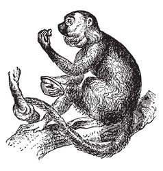 Howling monkey vintage vector
