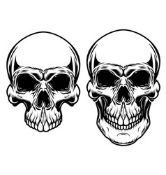 human skulls isolated on white background design vector image